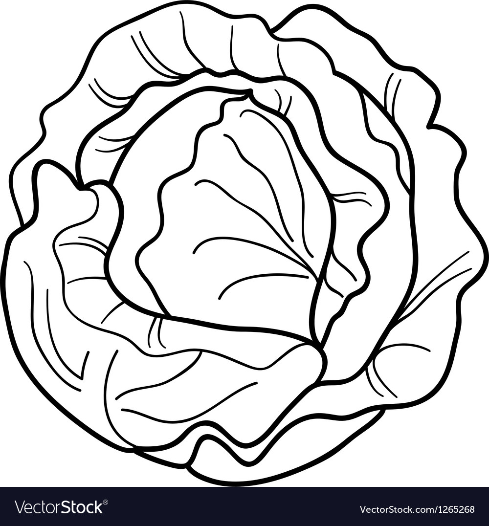 Cabbage vegetable cartoon for coloring book Vector Image