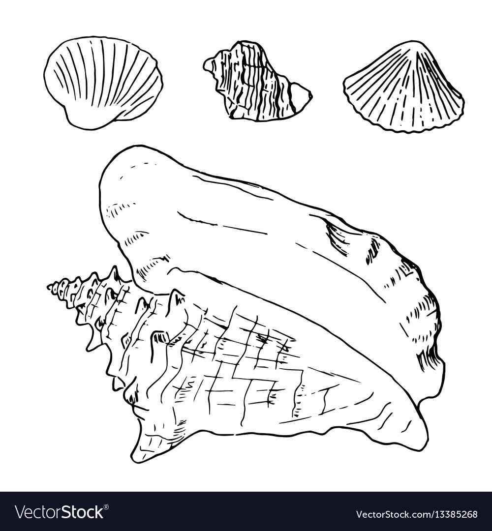 Set of various beautiful mollusk sea shells