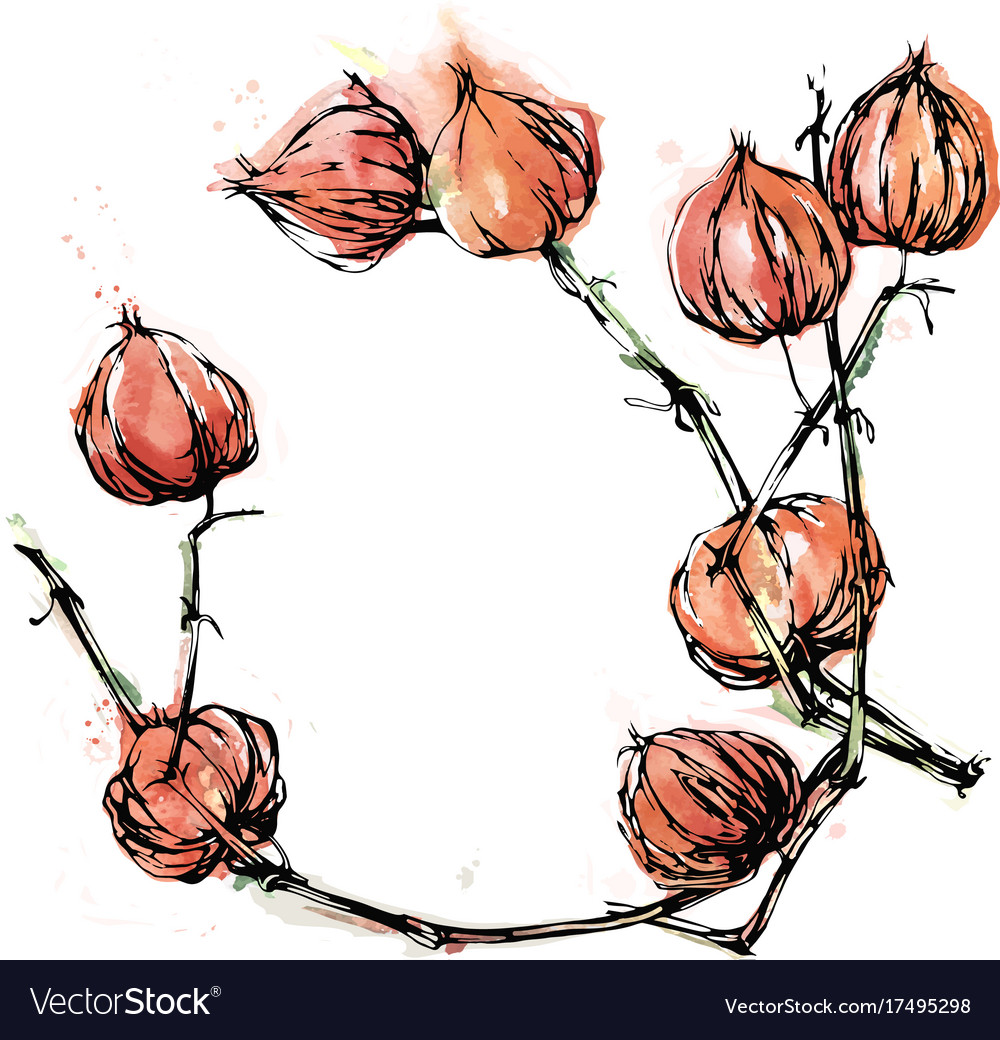 Physalis background