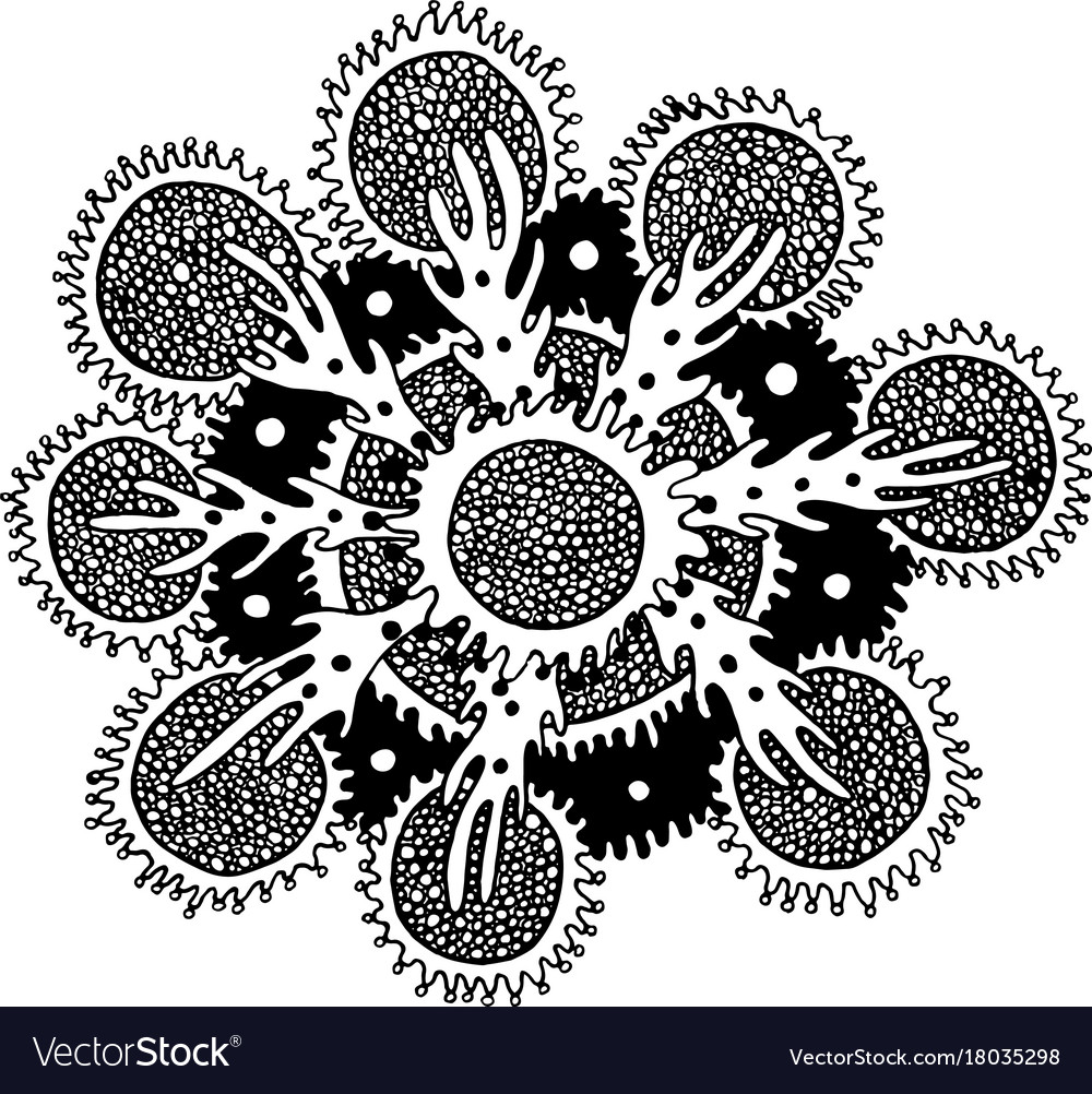 Sea mandala flower with coral and algae vector image