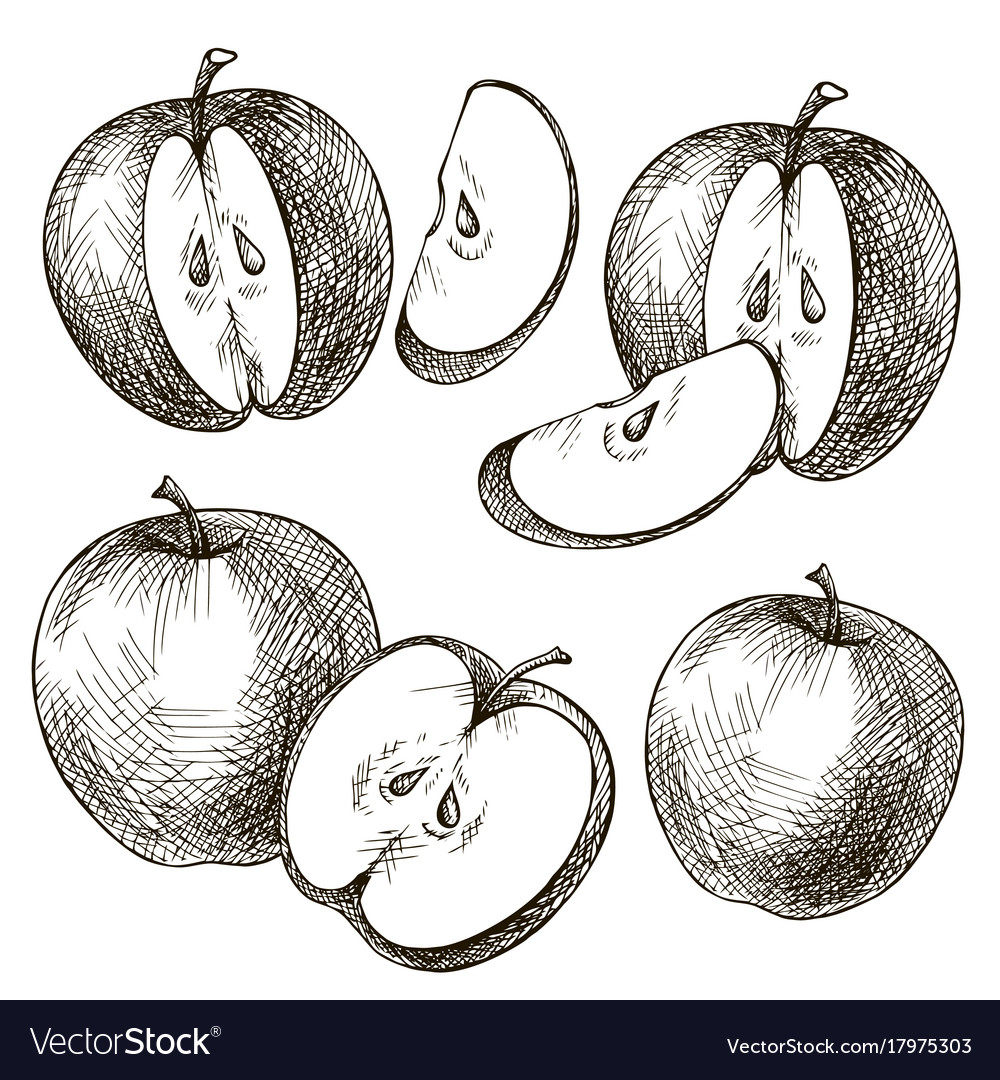 Set of apples hand drawn