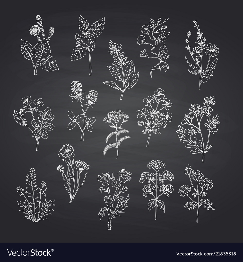 Hand drawn medical herbs set on black