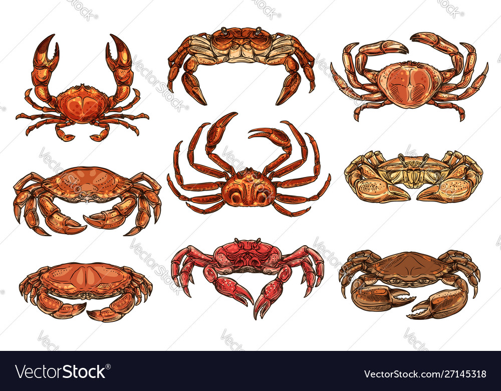Hermit hairy and king crans lobster