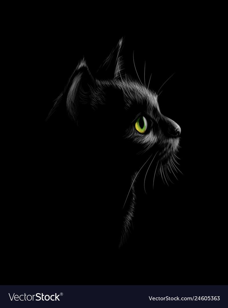 Portrait a cat on a black background