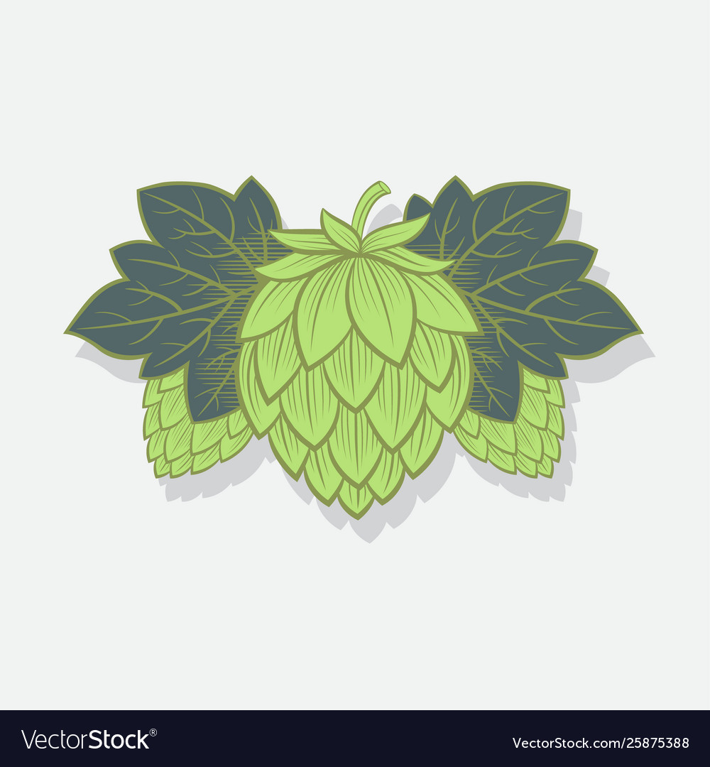 Green hop cone engrawing beer brewing