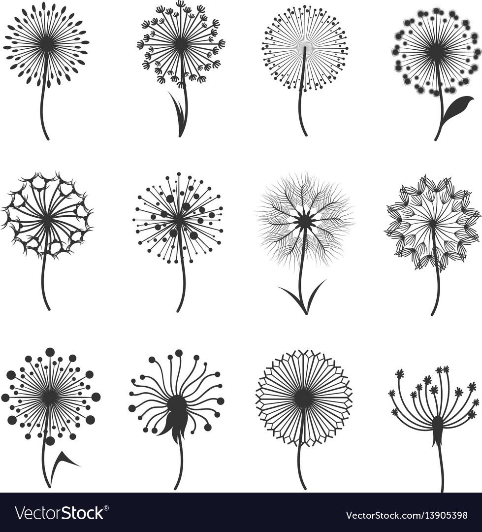 Dandelion flowers with fluffy seeds black floral