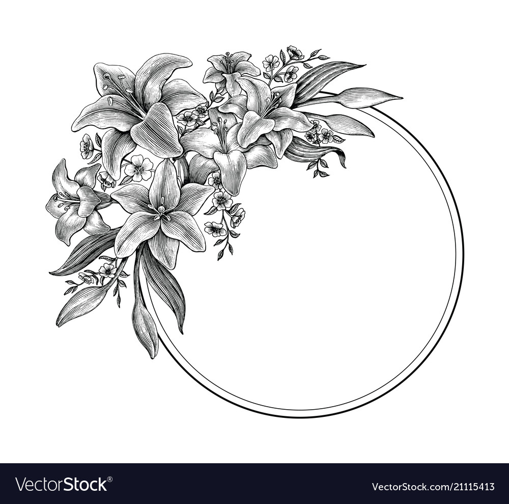 Lily Flowers Hand Drawing Vintage Black And White Vector Image
