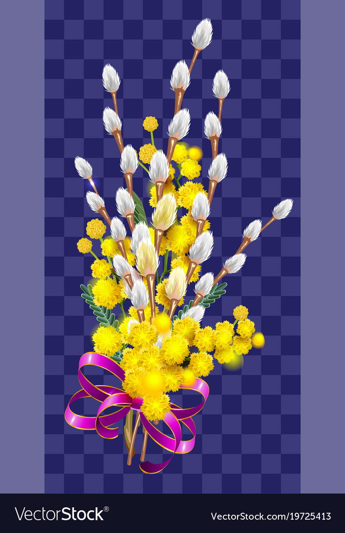 Yellow mimosa and fluffy branch of pussy willow vector image