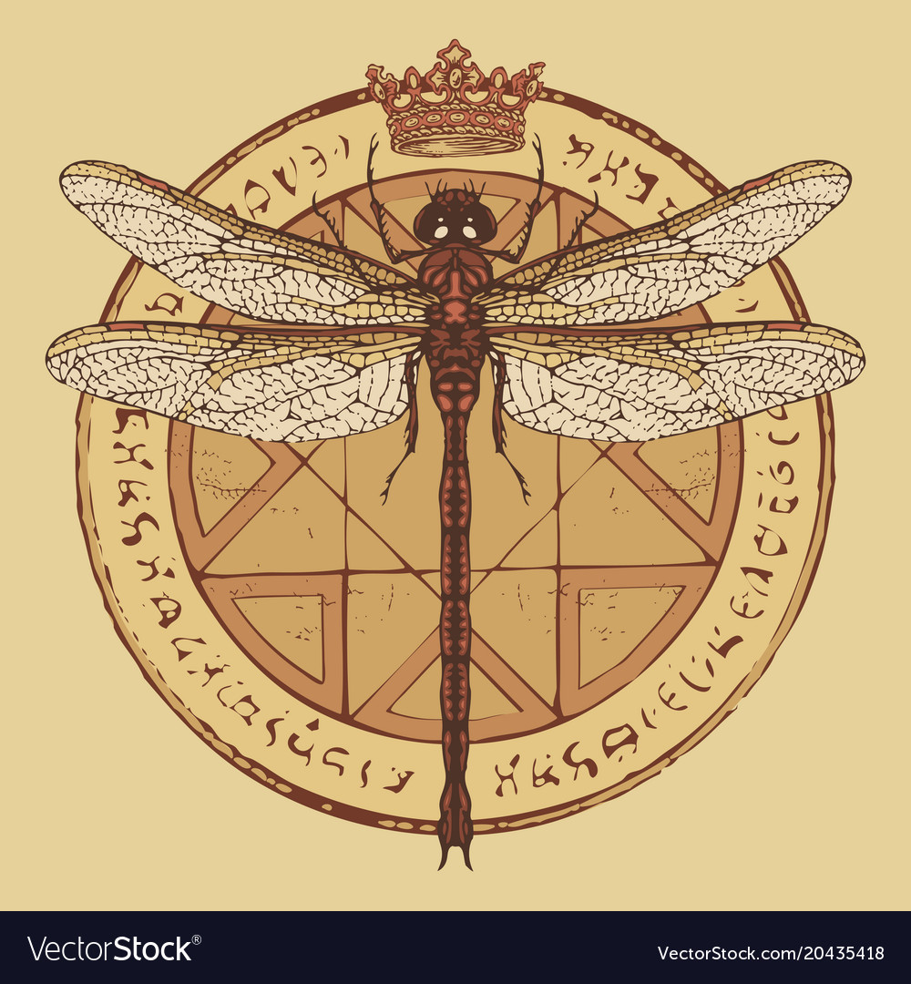 Drawing Of Dragonfly On An Octagonal Star Vector Image