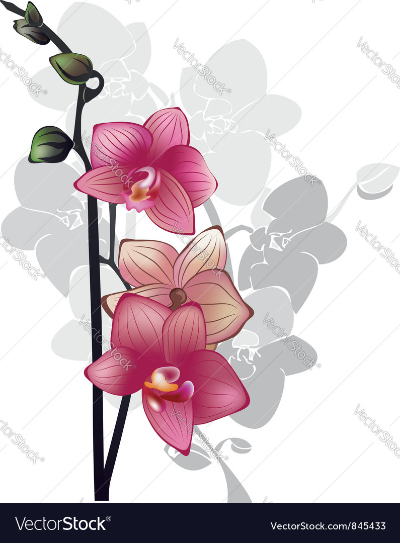 Branch of pink orchids vector image