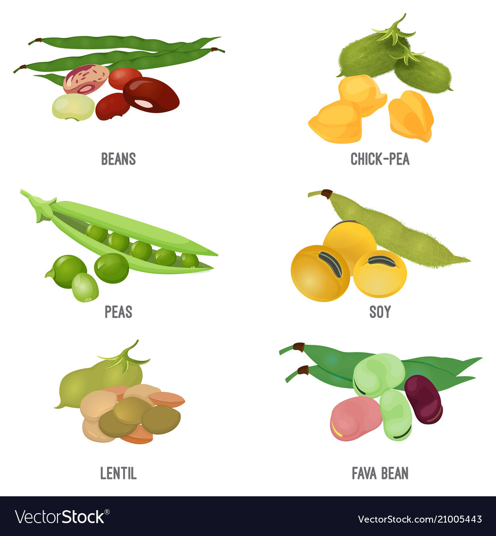 Beans species set healthy and nutritious natural