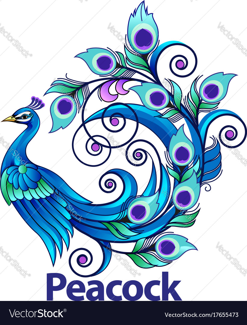 peacock royalty free vector image vectorstock rh vectorstock com peacock vector illustration peacock vector free