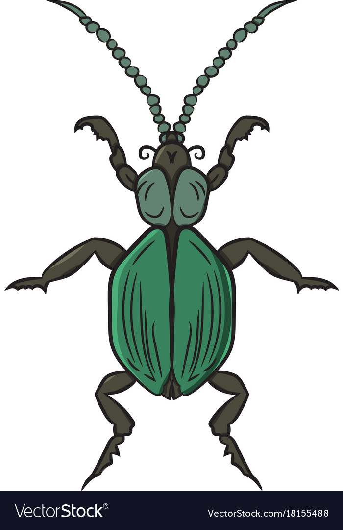 green beetle drawing by hand royalty free vector image
