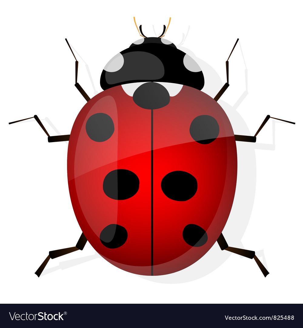 Ladybird Royalty Free Vector Image - VectorStock