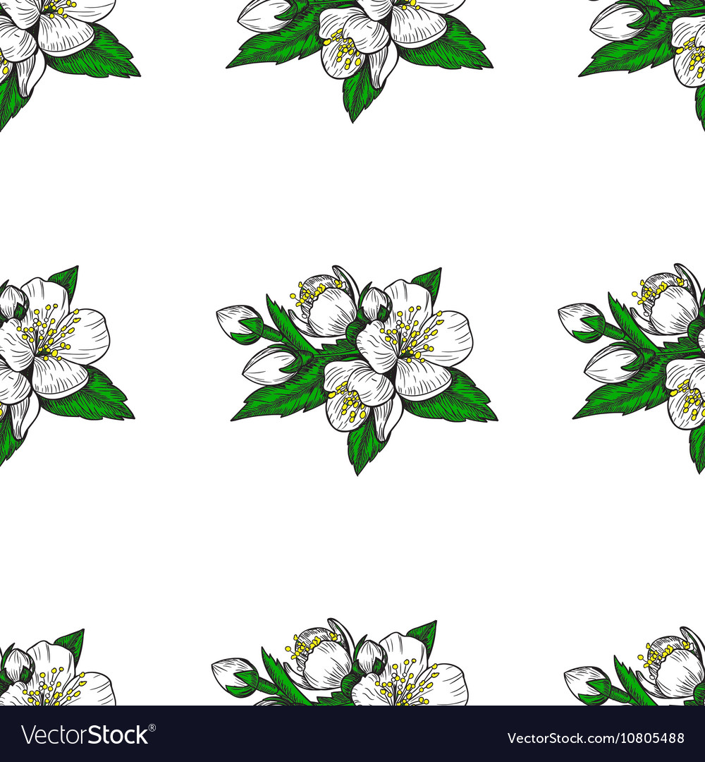 Seamless pattern flowers and leaves of the apple