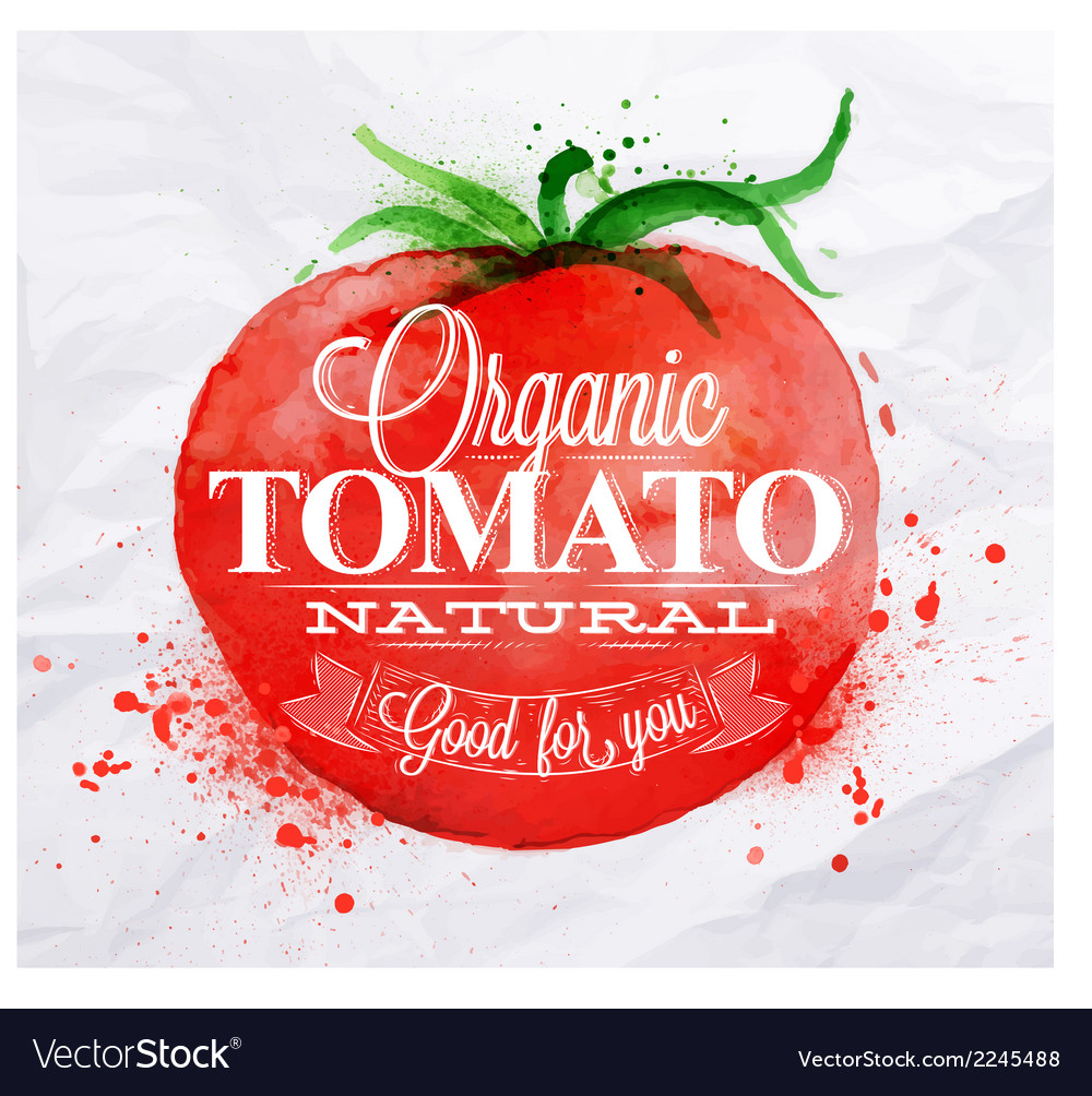 Tomato watercolor Poster vector image