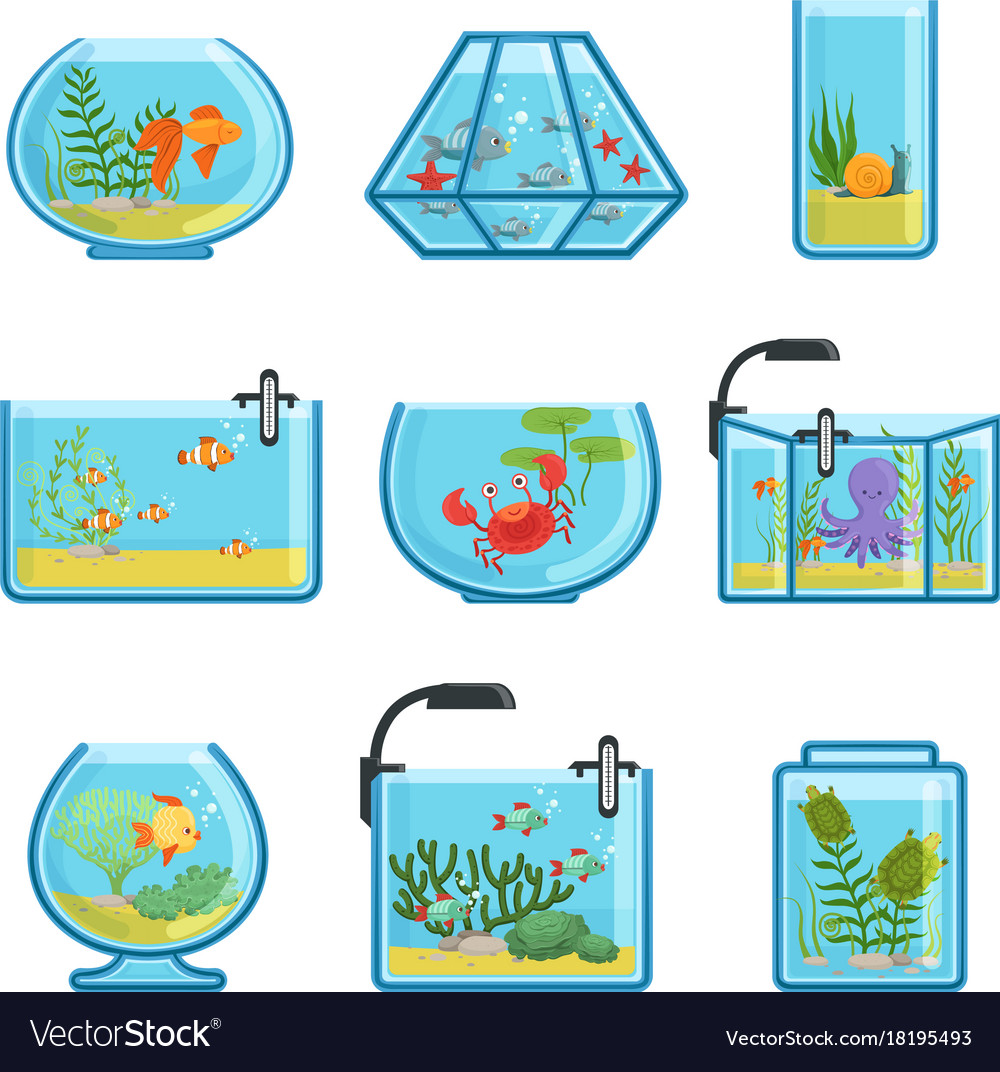 Set of different aquariums with