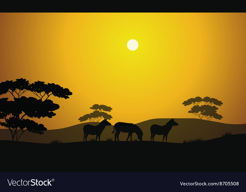 Beautiful zebra silhouette scenery