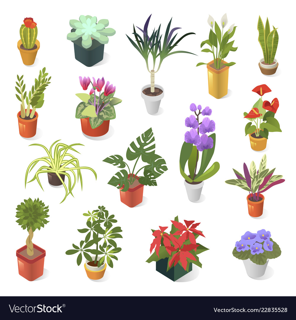 Home plant for green home decoration isometric Vector Image