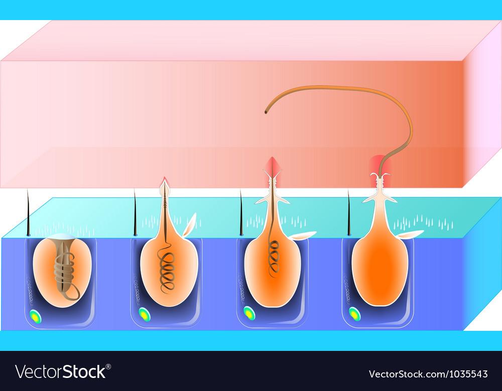 Nematocys scheme