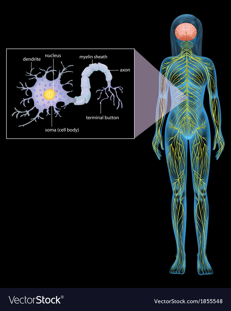 Female Neuron