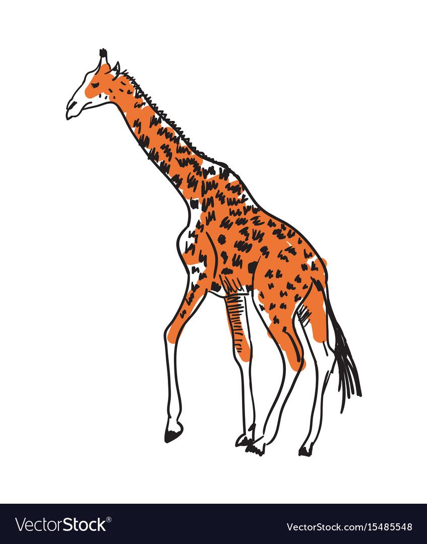 Giraffe hand drawn isolated icon vector image