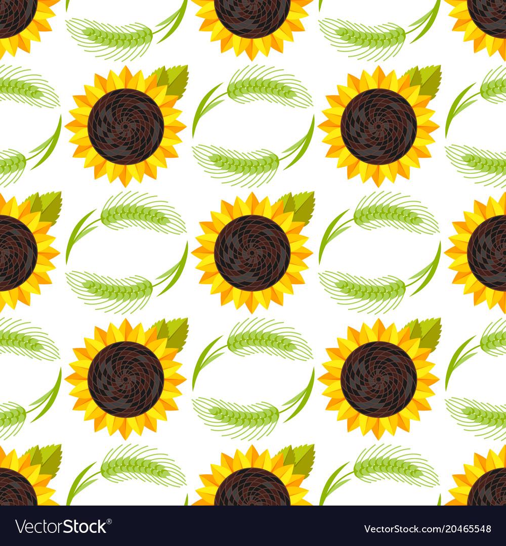 Rye wheat harvest ears of golden sunflower vector image