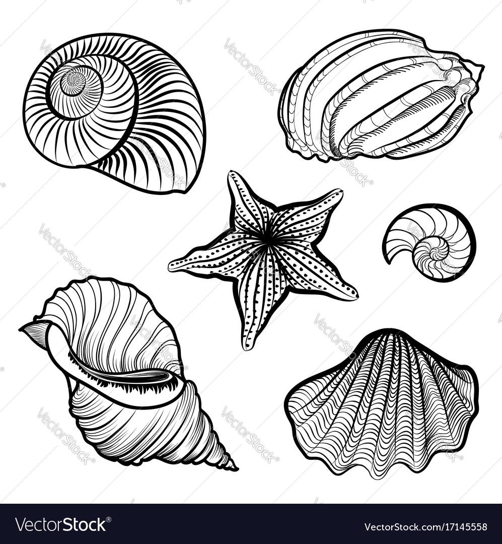 Various seashell starfish sea shell marine life