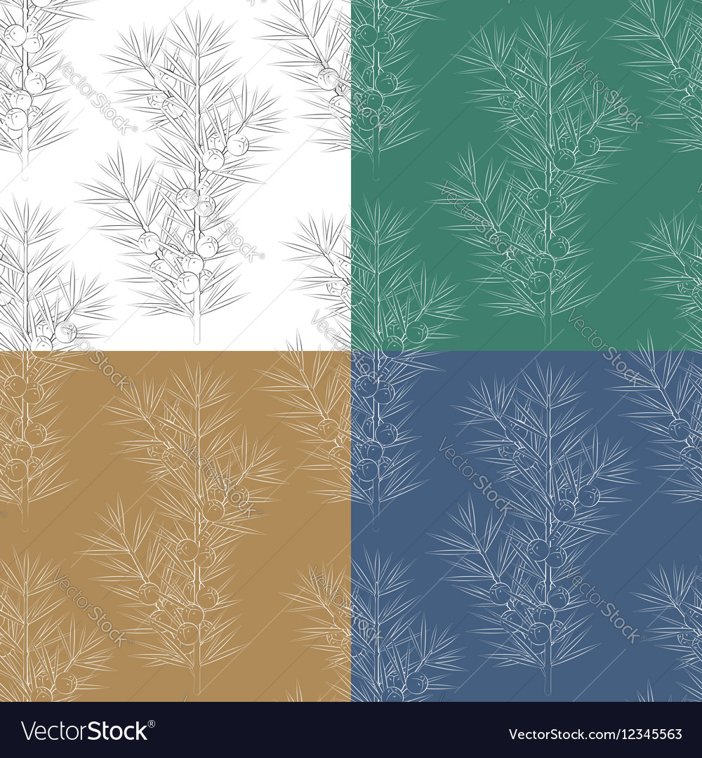 Set of seamless patterns with juniper branches