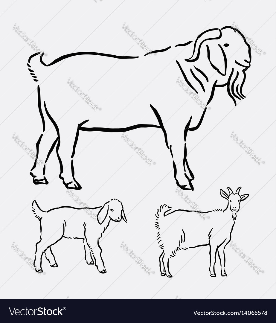 Goat pet animal pose hand drawing