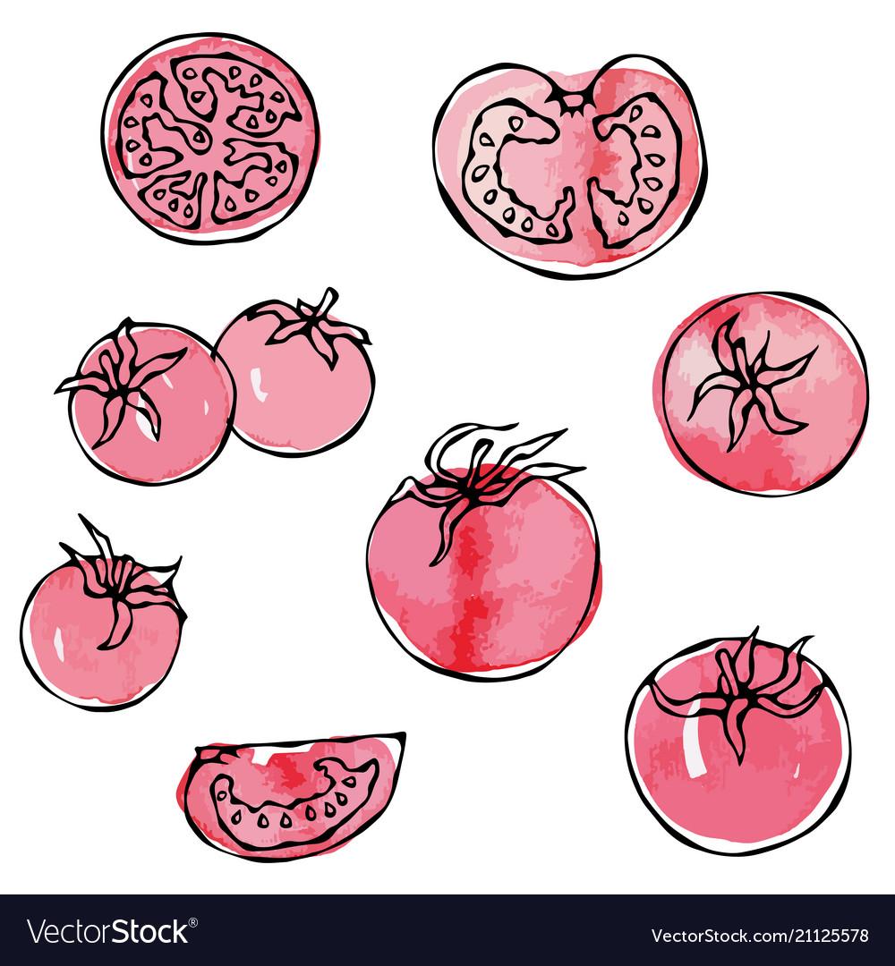 Watercolour whole tomato tomato slices half of