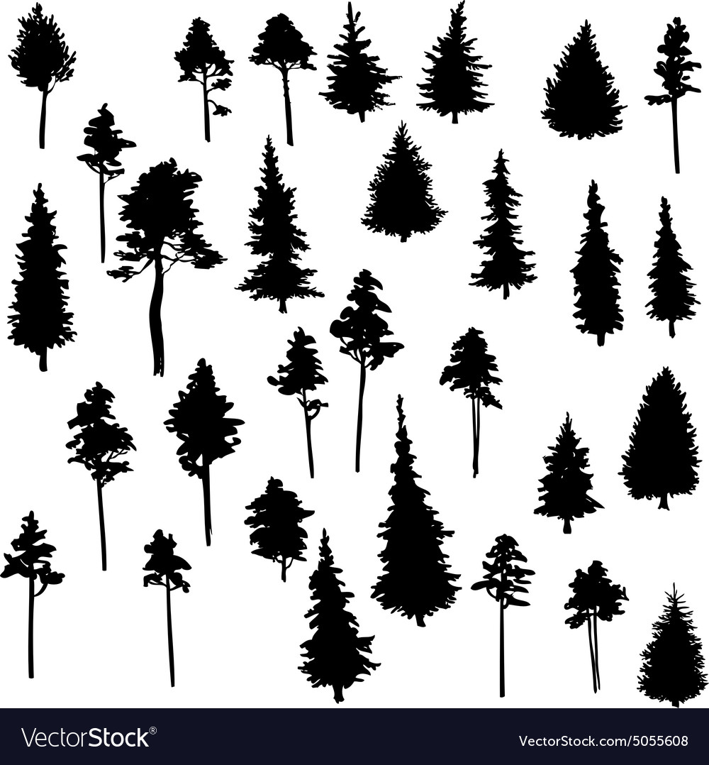 Set of conifer trees Royalty Free Vector Image