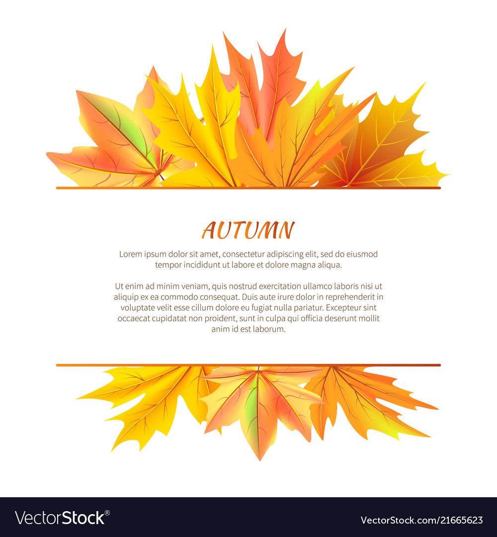 Autumn background with bunch maple leaves