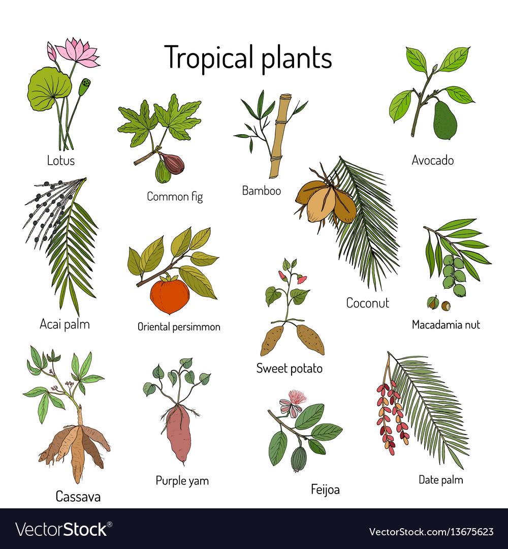Hand drawn branches and leaves of tropical plants