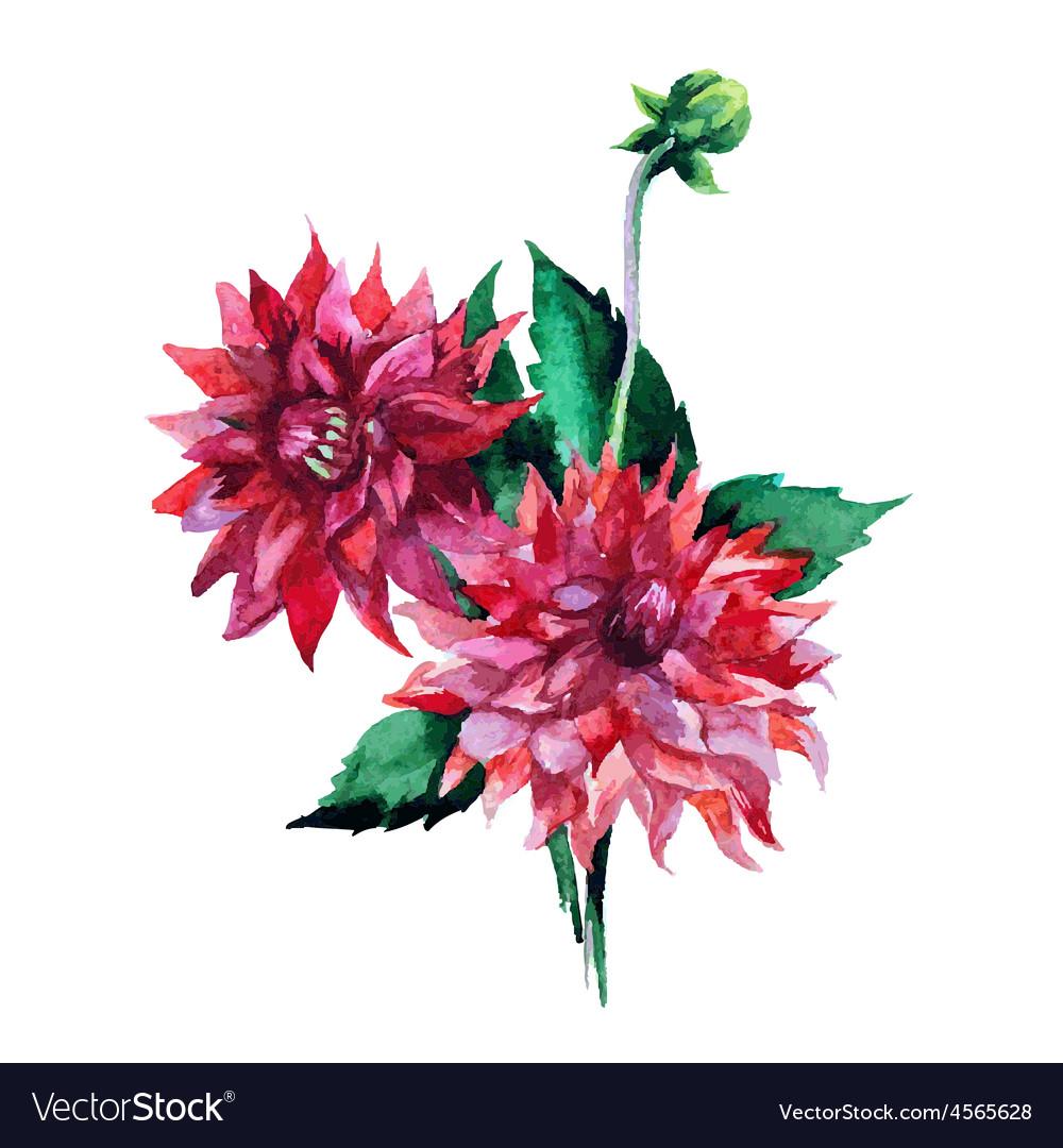 Dahlia flowers watercolor royalty free vector image dahlia flowers watercolor vector image izmirmasajfo