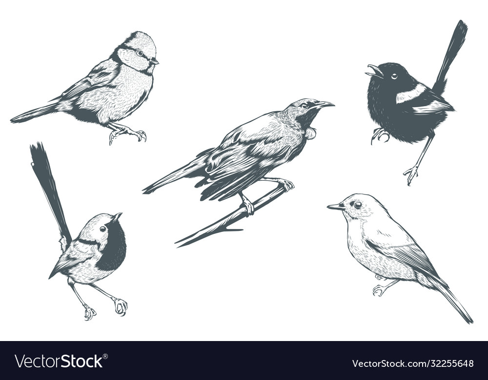 Set bird line art