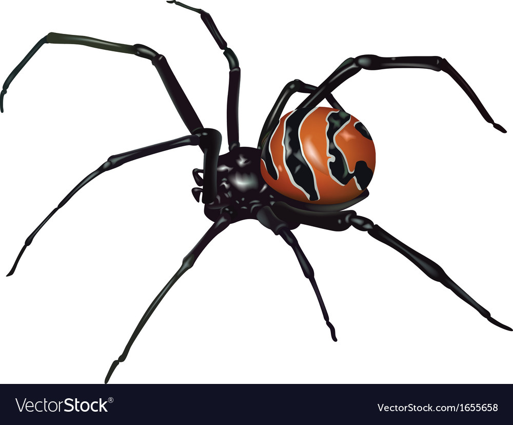 black widow spider royalty free vector image vectorstock