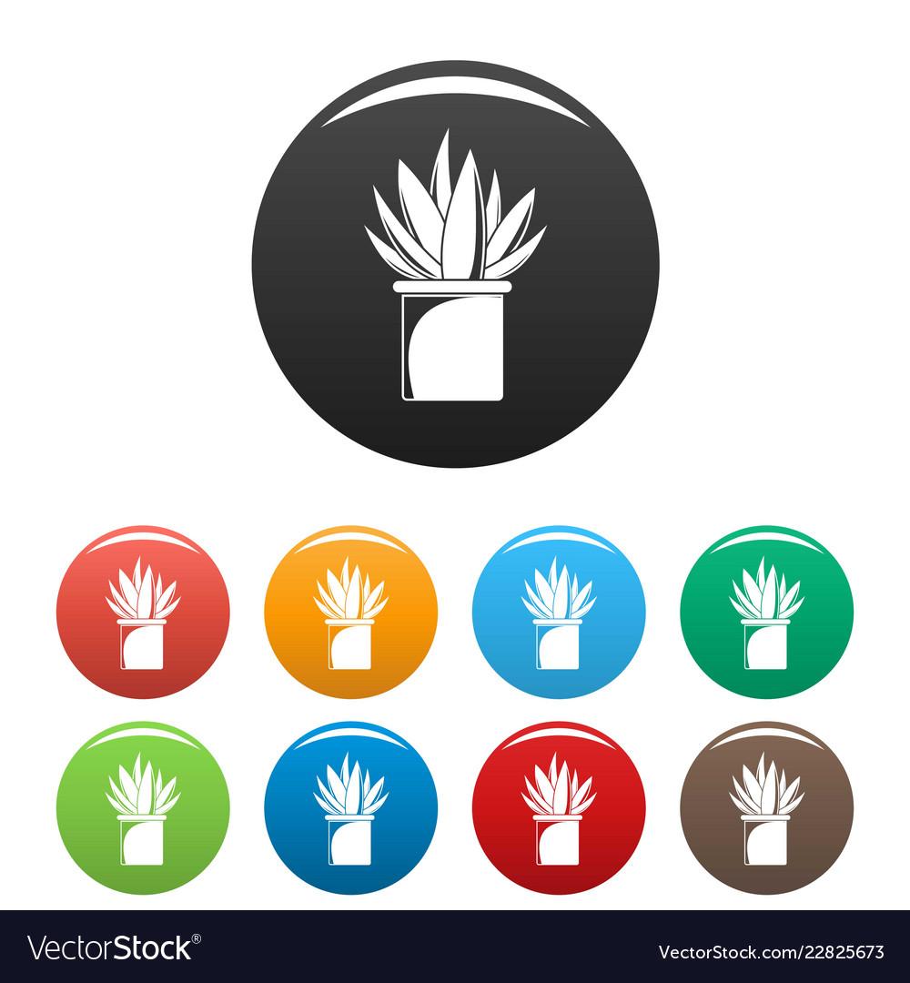 Aloe cactus pot icons set color