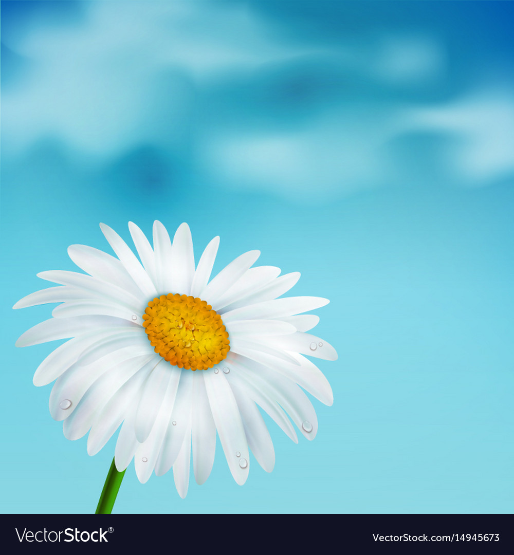 Chamomile on a blue sky background vector image