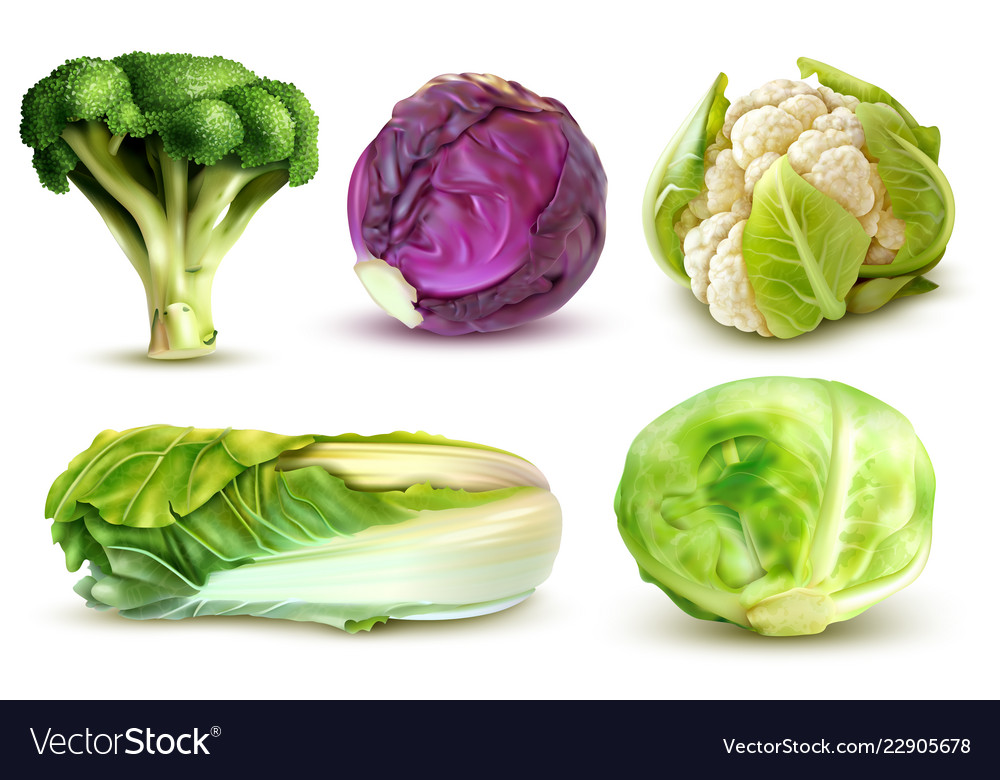 Cabbage realistic set