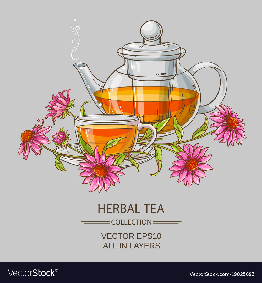 Cup or echinacea tea and teapot vector image
