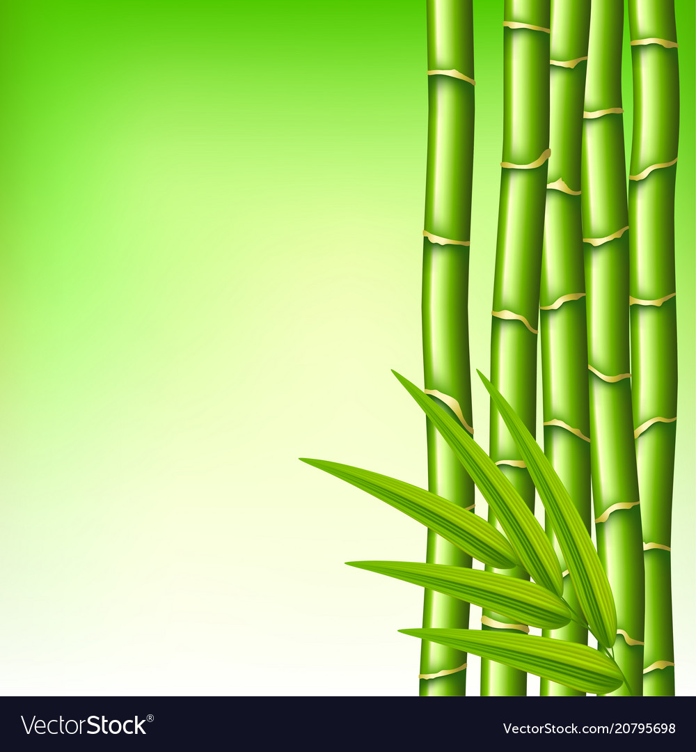Bamboo branches on green background
