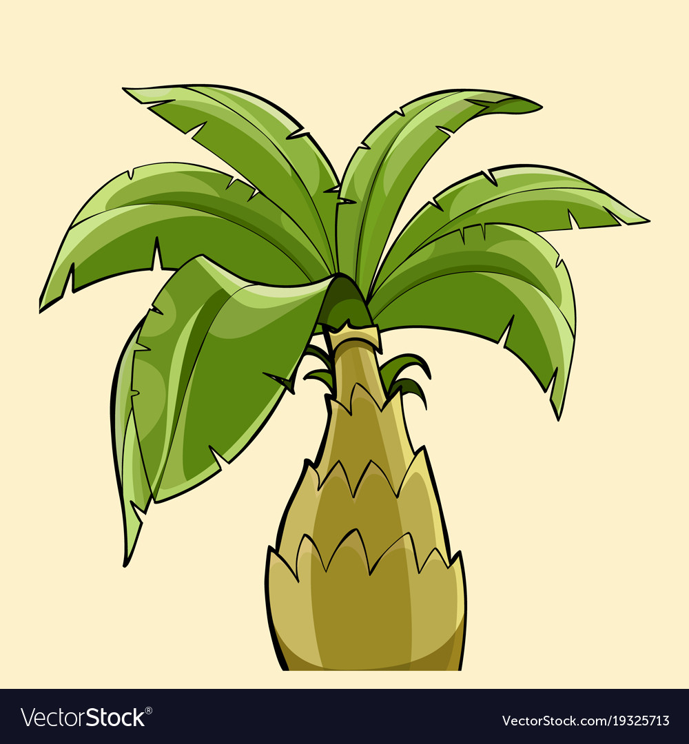 Cartoon Palm Tree With A Thick Trunk Vector Image