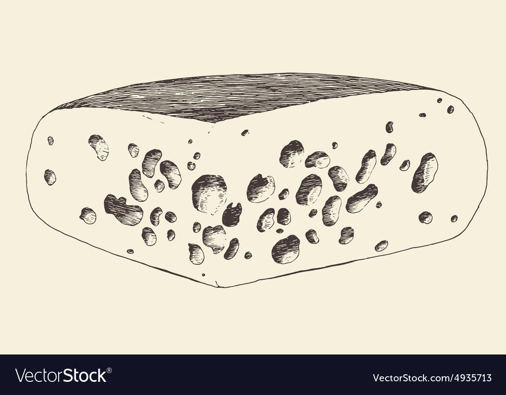 Cheese hand drawn engraving vintage vector image