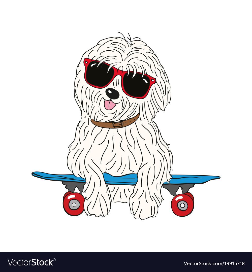 Coton de tulear dog breed vintage