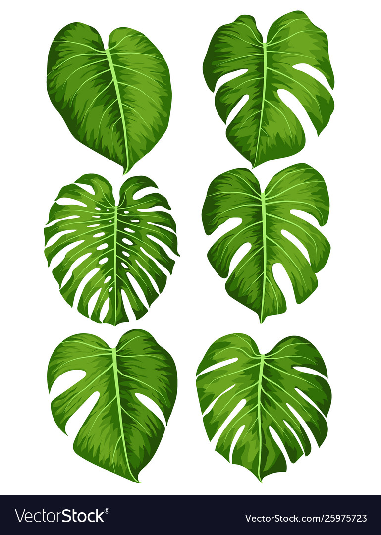 Big Green Leaves Tropical Monstera Plant Vector Image Hang this wall hanging on a small hook or nail. vectorstock