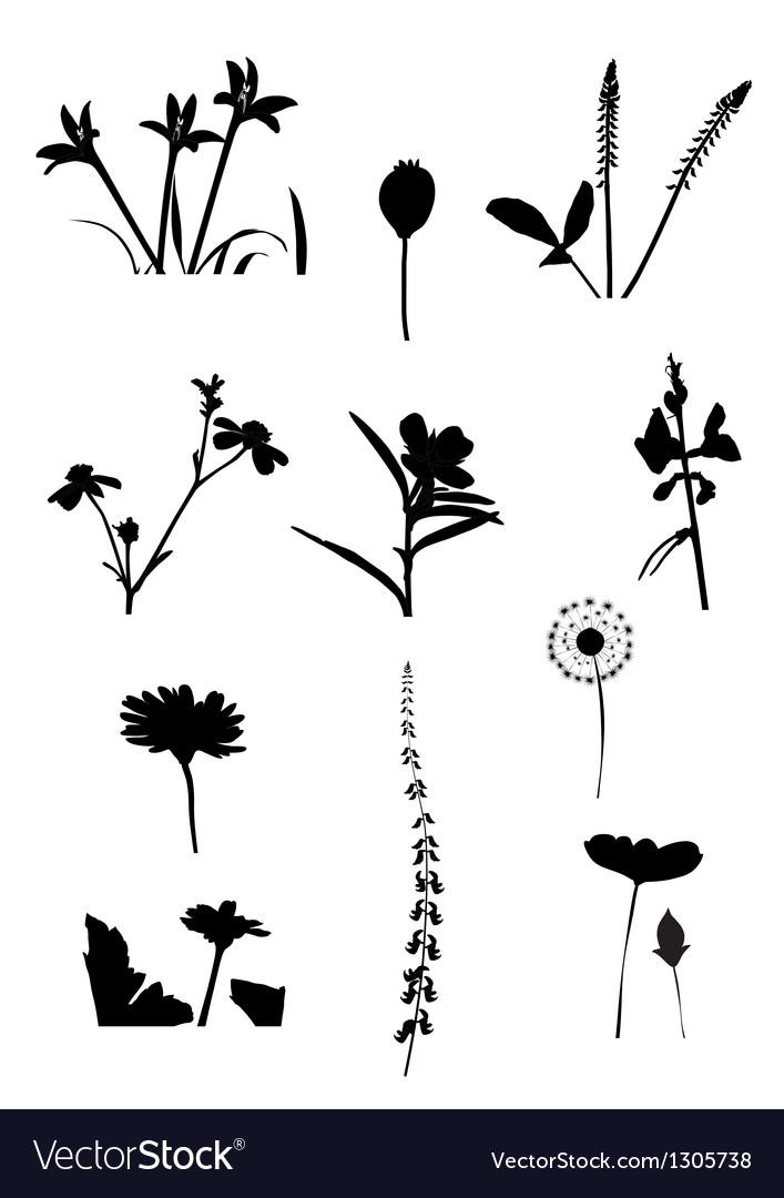 Collection of flower isolate