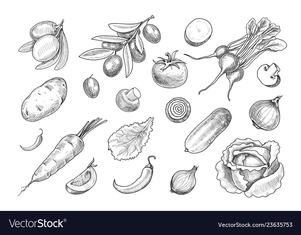 Hand drawn sketch various vegetables set