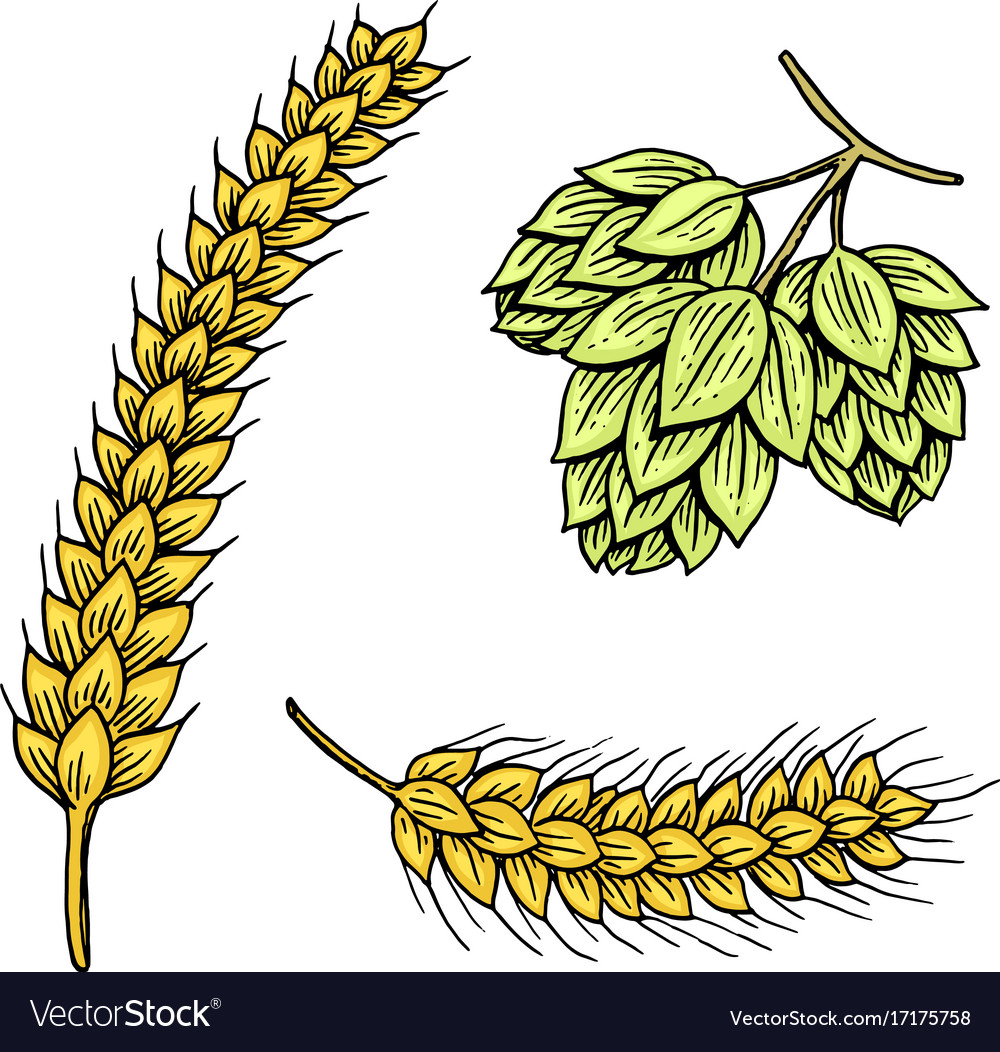 Barley and wheat malt and hops beer of