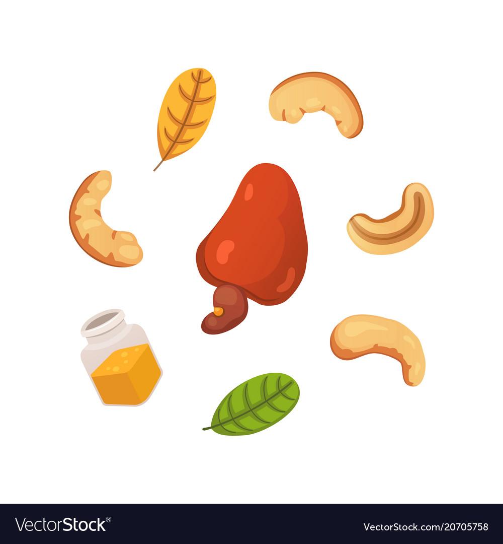 Set cashew nut in cartoon